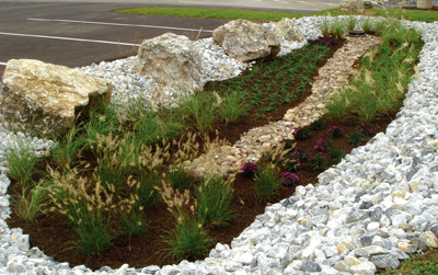 landscaping solutions for swampy areas